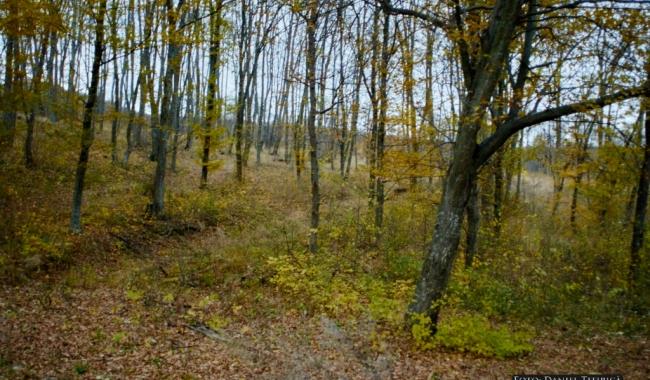 Sursa foto: www.101stiri.ro-Daniel TITIRICĂ  Pădurea Măcin, județul Tulcea