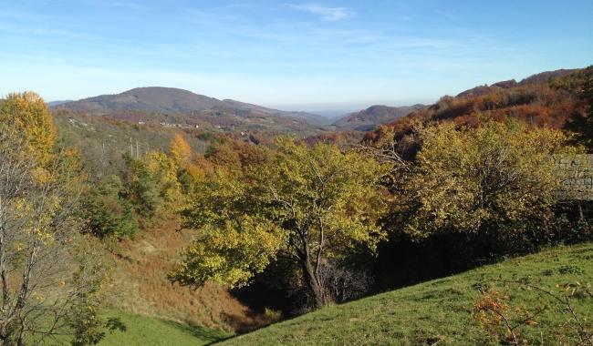 Sursa foto: www.101stiri.ro-Grațiela GHEORGHE CARAGICU