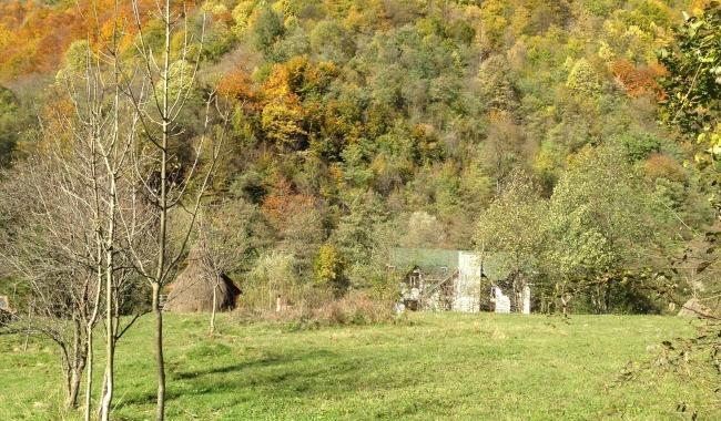 Sursa foto: www.101stiri.ro-Grațiela GHEORGHE CARAGICU  Undeva în Oltenia
