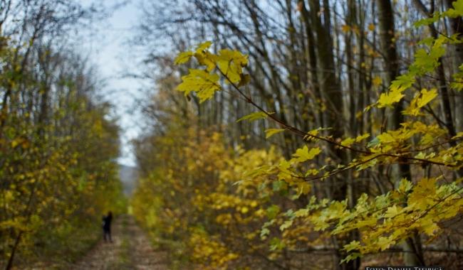 Sursa foto: www.101stiri.ro Pădurea Măcin-Daniel TITIRICĂ