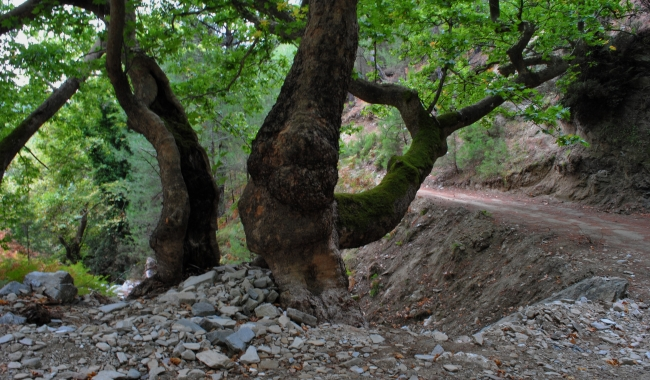 Sursa foto: www.101stiri.ro-Brîndușa DAN