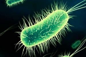 Ce este și cum se transmite bacteria E.coli, care a făcut ravagii printre bebeluși