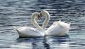 Dacă viaţa ar avea un scop, acesta nu ar putea fi decât descoperirea iubirii împărtăşite total